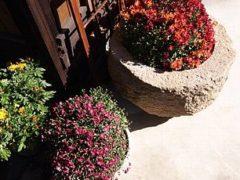 植木鉢は元養蚕の火鉢