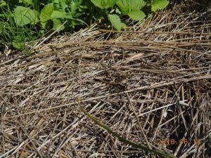 草むらに隠れるトンボ