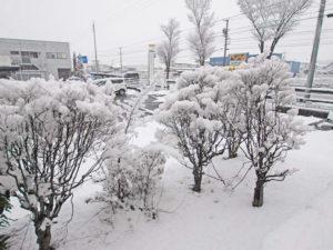 雪をかぶる庭木