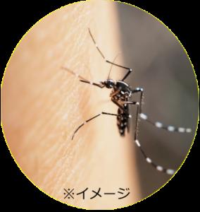 シマカ 網戸の修理はお早めに! シマカ(シマ蚊)登場 – 信州ハウジング|長野県
