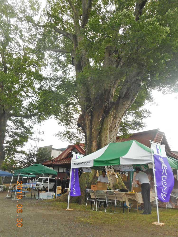 大木とテント
