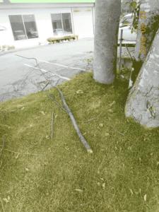 落下した枝